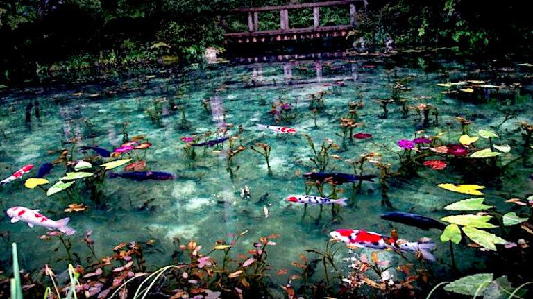 """""""Lo stagno di Monet"""" a Seki, Giappone"""
